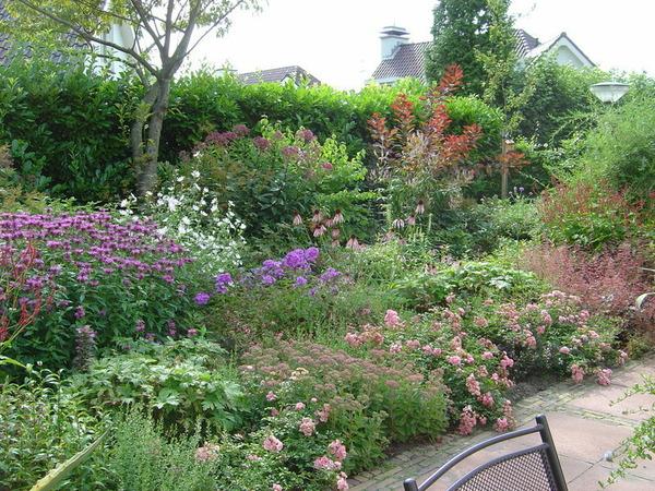 Vaste Planten Tuin : Een vaste plantentuin voor de liefhebber velzelhoveniers oegstgeest